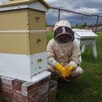 School-wide Collaboration Helps Bring Beekeeping Program to Southeastern