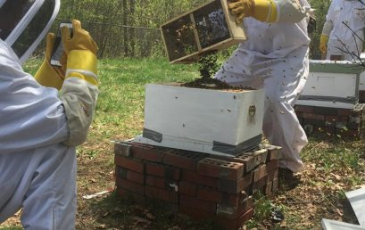 Honey Bees a Sweet Addition to Environmental Curriculum
